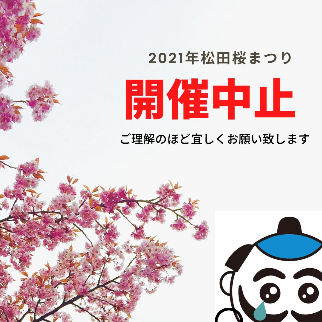 町 河津 桜 神奈川 松田
